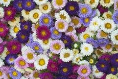 Wzór kwiaty różni kolory Obraz Royalty Free