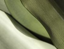 wzór liści obrazy stock
