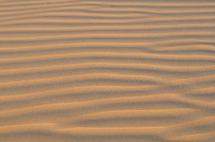 Wzór linie w Pustynnym piasku Obraz Royalty Free