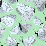 Wzór motyle Fotografia Stock