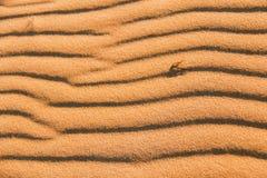 Wzór na piaskach Obraz Stock