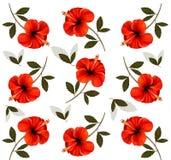 Wzór piękni czerwoni kwiaty Fotografia Stock