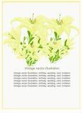 Wzór piękny dla karty z lelują również zwrócić corel ilustracji wektora Zdjęcie Royalty Free