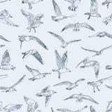 Wzór seagulls Zdjęcia Royalty Free