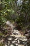 Wzór w kamiennej chodzącej ścieżce, góra Tinbeerwah Obrazy Royalty Free
