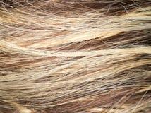 Wzór włosy Obraz Royalty Free