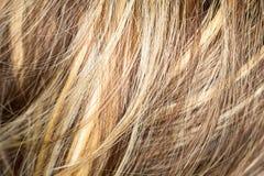 Wzór włosy Zdjęcia Royalty Free