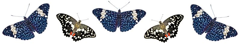 Wzór wapno krakersa i swallowtail motyle odizolowywający na białym tle Obrazy Royalty Free