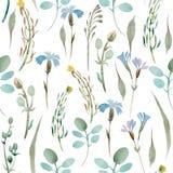Wzór wildflowers i liście na białym tle Zdjęcie Royalty Free