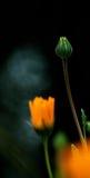 wzór wysokiej kwiaty wiosny obrazy royalty free