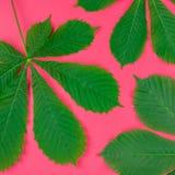 Wzór z świeżymi zielonymi kasztanów liśćmi obrazy stock