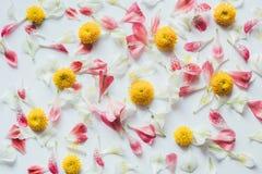 Wzór Z Kolorowymi kwiatami Na Białym tle Zdjęcia Royalty Free