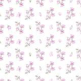 Wzór z małymi magnoliami Zdjęcie Royalty Free