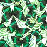 Wzór z motylami Obraz Stock