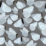 Wzór z motylami Fotografia Royalty Free