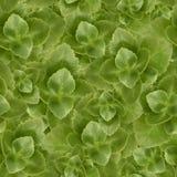 Wzór z zielonymi liśćmi Zdjęcie Royalty Free