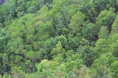 Wzór zielony drzewo przy nautre Zdjęcie Royalty Free