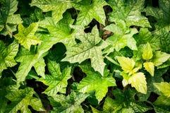 Wzór zielony liść zdjęcia royalty free