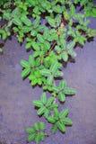 Wzór zielony liść Obrazy Stock