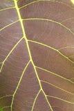 Wzór zielony tekowy liść. Obraz Royalty Free