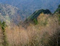 Wzdłuż Ałunowego jama śladu, Great Smoky Mountains park narodowy, Tennessee obrazy stock
