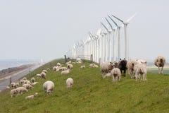 wzdłuż dajków wiatraczków holenderskich pastwiskowych pobliski baranich zdjęcia stock