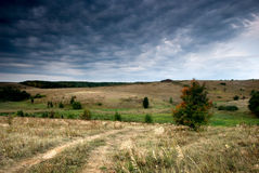 wzdłuż jesień prącia wiejskiego drzewa Fotografia Royalty Free