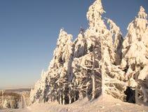 wzdłuż kraju zakrywający jedlinowi drogi śniegu drzewa Fotografia Stock