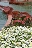 wzdłuż kwiatu rzeki kamienia Obraz Royalty Free