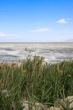wzdłuż ożypałek wielkiego jeziora soli Fotografia Royalty Free