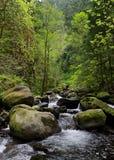 wzdłuż objętego moss spring kamieni strumienia Obrazy Stock