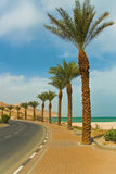 wzdłuż palmowych drogowych drzew fotografia stock