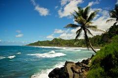 wzdłuż plaży palma Zdjęcia Stock