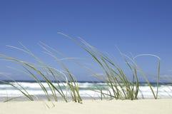 wzdłuż plaży trawa Obraz Royalty Free