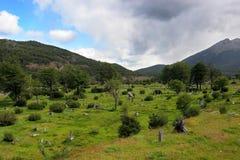 wzgórza łąki ushuaia Zdjęcia Stock