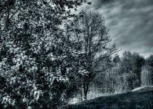 wzgórza 2 drzewa Obrazy Stock