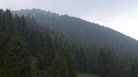Wzgórza conifer drzewa zbiory