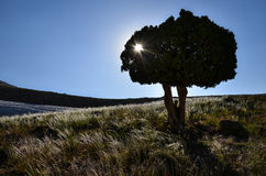 wzgórza drzewo obrazy royalty free