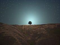 wzgórza drzewo jeden zdjęcie stock