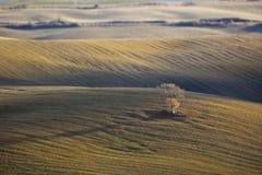wzgórza drzewo samotny dębowy Tuscan Fotografia Stock