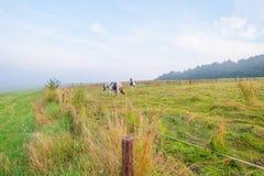 Wzgórza Eifel park narodowy w świetle słonecznym Fotografia Stock