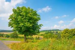 Wzgórza Eifel park narodowy w świetle słonecznym Obrazy Stock