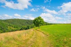 Wzgórza Eifel park narodowy w świetle słonecznym Zdjęcie Royalty Free