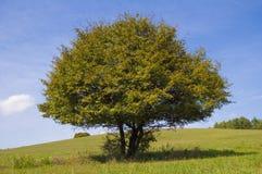 wzgórza, las i niebieskie niebo, Obraz Stock
