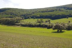 wzgórza, las i niebieskie niebo, Fotografia Stock