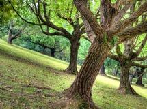 wzgórza skłonu tembusu drzewa Obrazy Stock