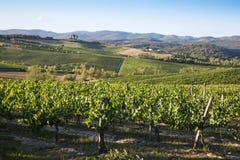 wzgórza Tuscan Obrazy Stock