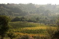 wzgórza Tuscany Obraz Royalty Free