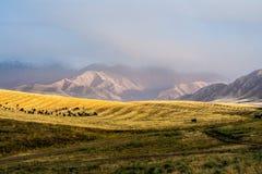 Wzgórza w Chui dolinie Obraz Royalty Free