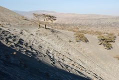 Wzgórza zakrywający powulkanicznymi popiółami, Wielki rift valley, Tanzania, Wschodni Afryka Obrazy Stock